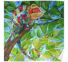 Panther chameleon Poster