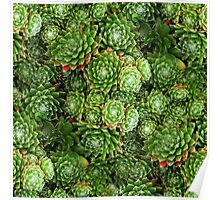 Greeny Green Hens and Chicks Poster