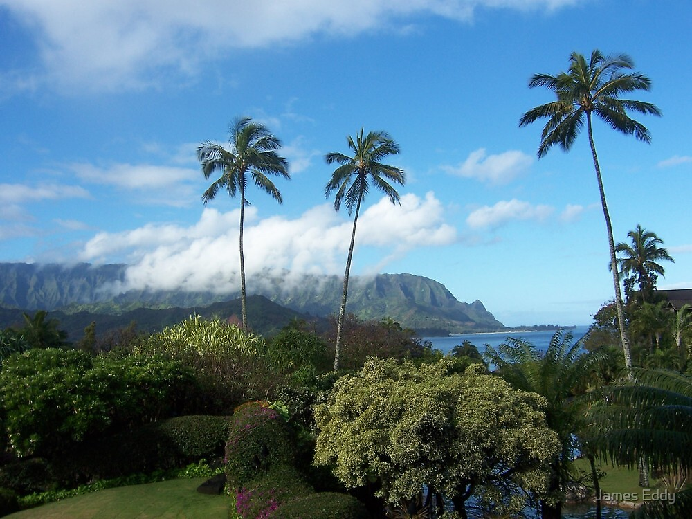 Palms at Hanalei by James Eddy