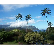 Palms at Hanalei Photographic Print