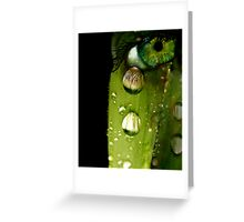 Dew You Cry? Greeting Card
