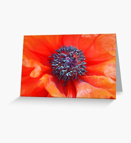 Oriental Poppy Greeting Card