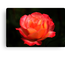 Not A Second Hand Rose Canvas Print