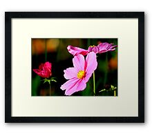 Pink and Yellow Cosmo Framed Print