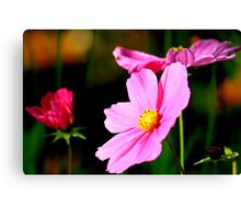 Pink and Yellow Cosmo Canvas Print