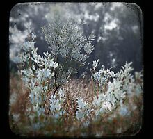 Dewy Regrowth by VigourGraphics