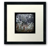Dewy Regrowth Framed Print