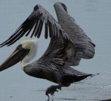 Pelican Takeoff Sticker