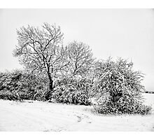 A pencil sketch from the snow gods Photographic Print