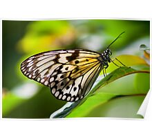 Yellow Butterfly Poster