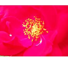 Red Color. Photographic Print