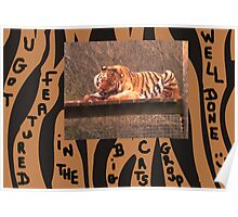 Big Cats Featured Banner Poster