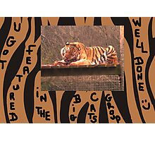 Big Cats Featured Banner Photographic Print