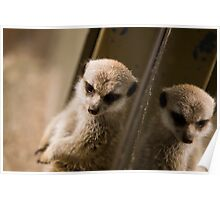 Meerkat Refection Poster