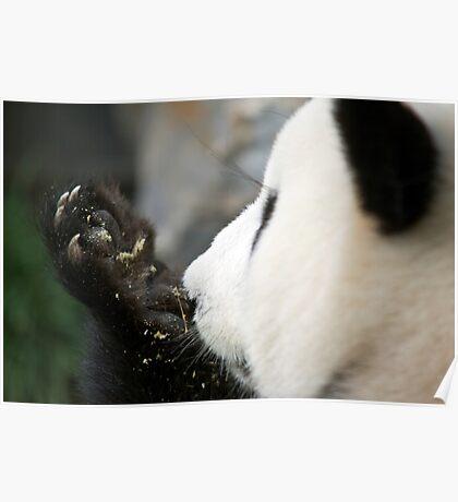 Funi - Adelaide Zoo Poster