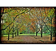 Corridor of Oaks I Photographic Print