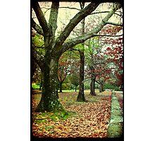 Corridor of Oaks II Photographic Print