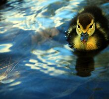 Little Duckie by Nuno Pires