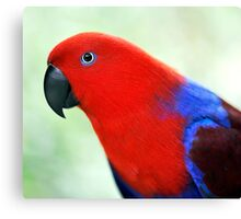 Simply Red - Eclectus parrot Canvas Print