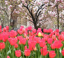 Colorful Spring Tulips, New York City by lenspiro