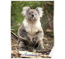 Koala - Otway Ranges, Victoria - Australia Poster