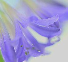 Flower's breath by Brian Bo Mei