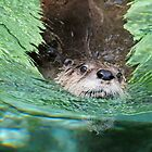 OTTER by mc27