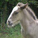 grey foal by monkeyferret