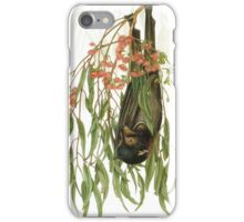 Forest Superstar, Black Flying-fox iPhone Case/Skin
