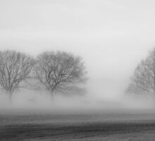 Trees in the Mist by David Dean