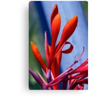 Cana Blossom Canvas Print