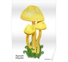 Orange-Gill Waxcap (Hygrocybe Marginata) Poster