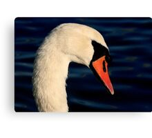 The Mute Swan Canvas Print