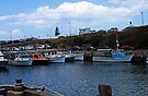 The Harbour - Wollongong  by Evita
