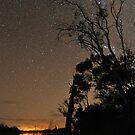 Starry Silhouette by Wayne England