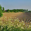 Potato field at Tholen by Adri  Padmos