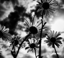 reaching for the sky ......... (b&w) by SNAPPYDAVE