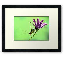 Katydid on flower Framed Print
