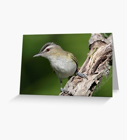 No Need To Remove Red Eye / Red Eyed Vireo Greeting Card
