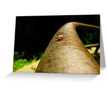 Head to Head with Spidell Greeting Card