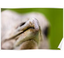 Head of a great bustard (Otis tarda) Poster