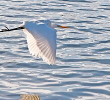 Egret #10 by mogue