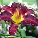 Maroon Daylily 1 by WTBird