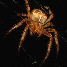 The Itsy Bitsy Spider by Rebecca Bryson