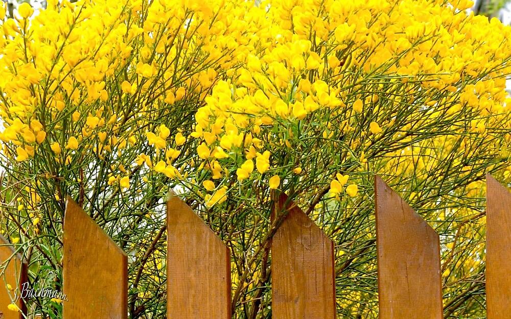 Gold - brush. by siggabach