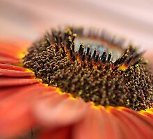 Sunflower by PaulineC