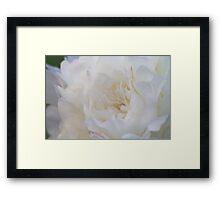 White Bloom - Garden Flower Petals Framed Print