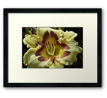 Yellow Daylily Front Framed Print