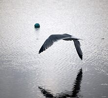 seagull flying over water by dcordeiro