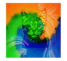 Cat in color maze by Healinglove